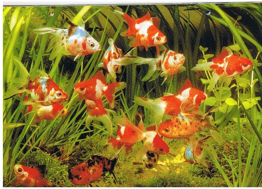 peces de ornato